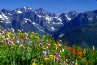 Flowers & Mountains